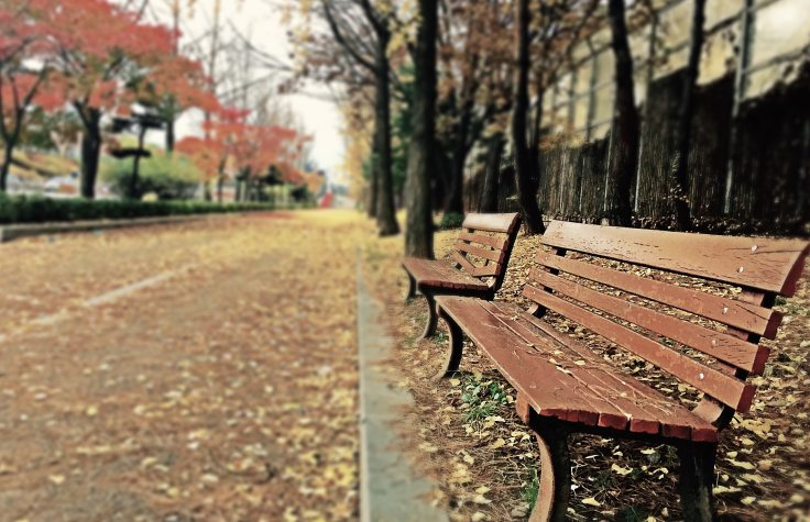 brown-wooden-bench-with-brown-dried-leaves